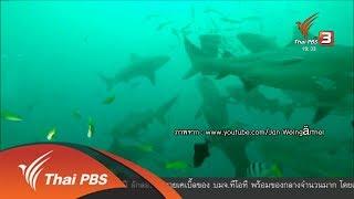 พลิกปมข่าว : อนาคตฉลามหัวบาตร (27 เม.ย. 61)
