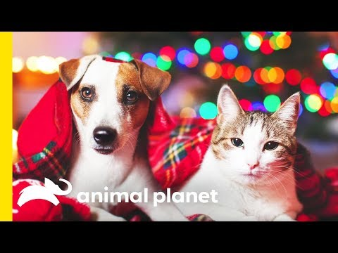 Pets, Presents and Parties: Keeping Your Animals Safe During the Holidays