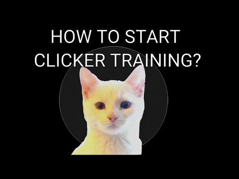 CLICKER TRAINING A CAT | How to Charge The Clicker Tutorial