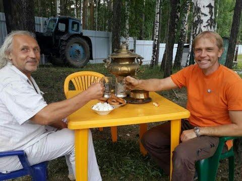 Ферментируем иван-чай — копорский чай. Пошаговая
