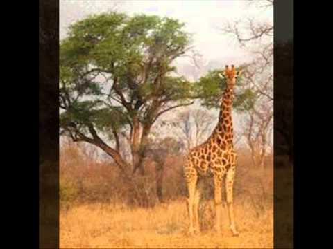 faune africaine de toute beauté