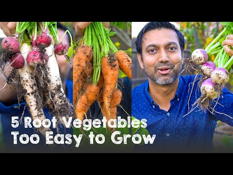 5 Root Vegetables TOO EASY to Grow