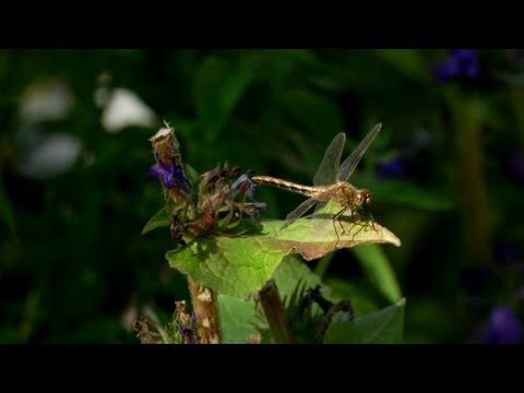 Nature in Your Own Backyard - HD Cinematography