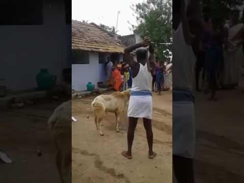 Goat bali