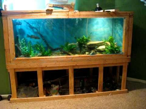 Monster 450 gallon aquarium update youtube for Plywood fish tank