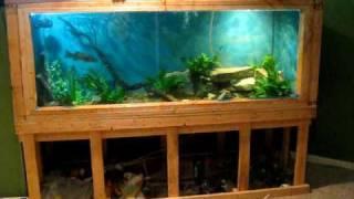 Monster! 450 gallon aquarium (update)