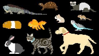 Pets - Book Version - Cat, Dog, Turtle - The Kids' Picture Show (Fun & Educational Learning Video)