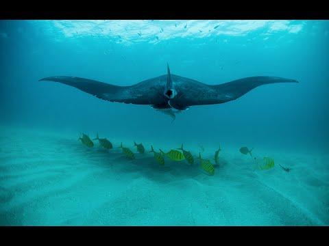 Expedition Western Australia: Ningaloo Reef