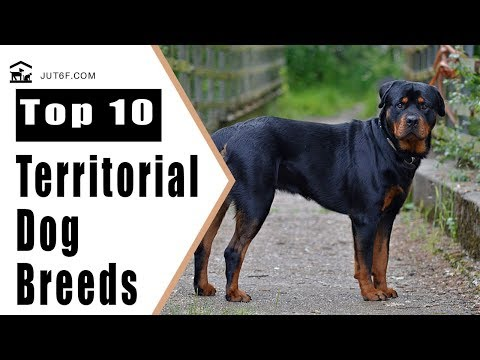 Top 10 Dog Breeds Known For Territorial Behavior