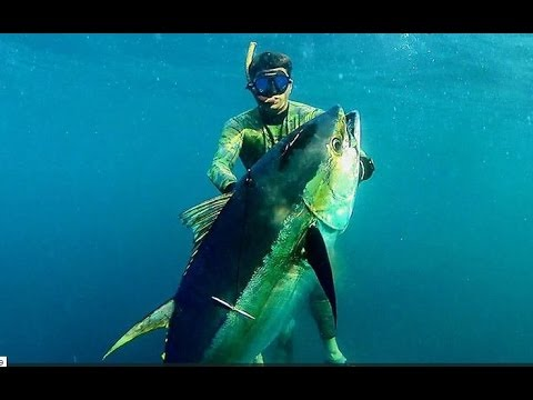 Pesca in apnea Tonno 85 kg a Panama - Pesca submarina atún - Tuna spearfishing ADZHOO