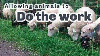 S4 ● E107 Letting animals do chores...