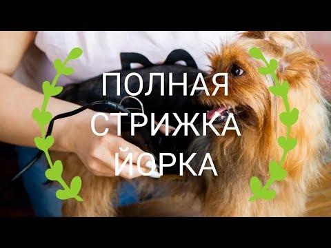 Как стричь маленькую собаку - полная стрижка йорка