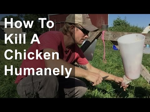 How to Kill a Chicken Humanely (Graphic)