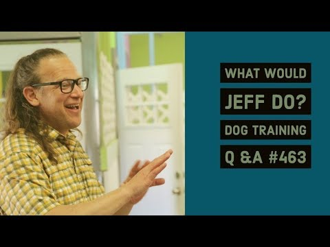 Dog growls when approached   Training a nervous dog   What Would Jeff Do? Dog Training Q & A #463