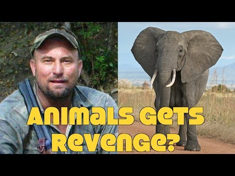Elephant Crushes Pro Hunter To Death: A Good Thing?