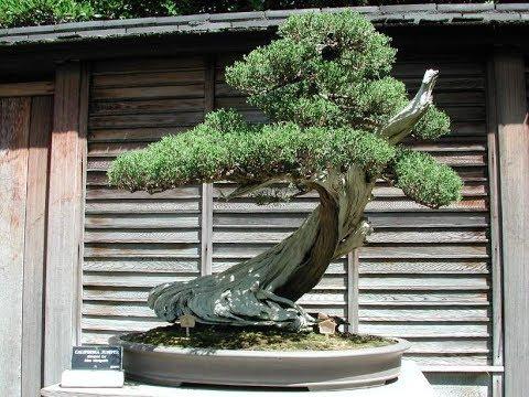 Top unique bonsai trees japan bonsai 2018 5 youtube for Unique bonsai trees