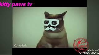 Танцующие и поющие коты и собаки!=)Сборник NEW VIDEO