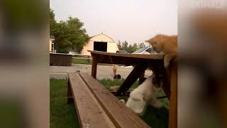 Try Not To Laugh Animals - Funny Cats Videos 2019 -  Funniest Compilation