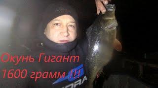 Гигантский Окунь на 1 6 кг Рыбалка на Волге осень 2019