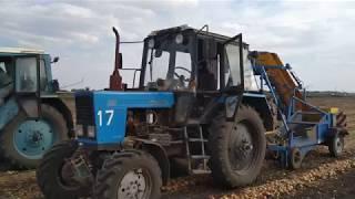 ЛУК репчатый - оптовые поставки из Саратовской области.