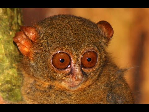 Sulawesi, Indonesia ~ Rain Forest Trekking, Diving, and Wildlife Smuggling