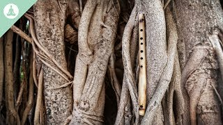 Bambusflöte Musik, asiatische Musik, Meditation, Entspannung
