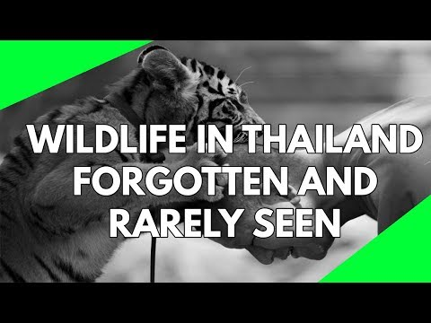 Wildlife Documentary: Thailand is incredibly beautiful. A fo
