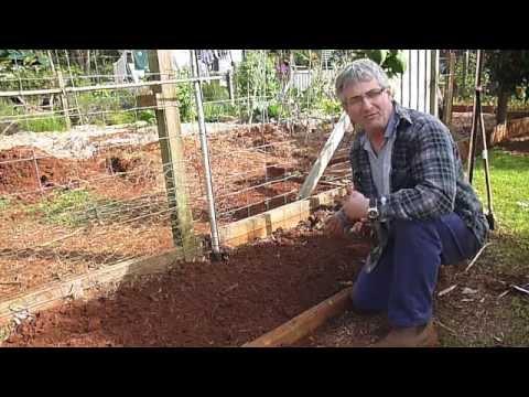 How to Plant and Grow Jerusalem Artichokes - Sunchokes
