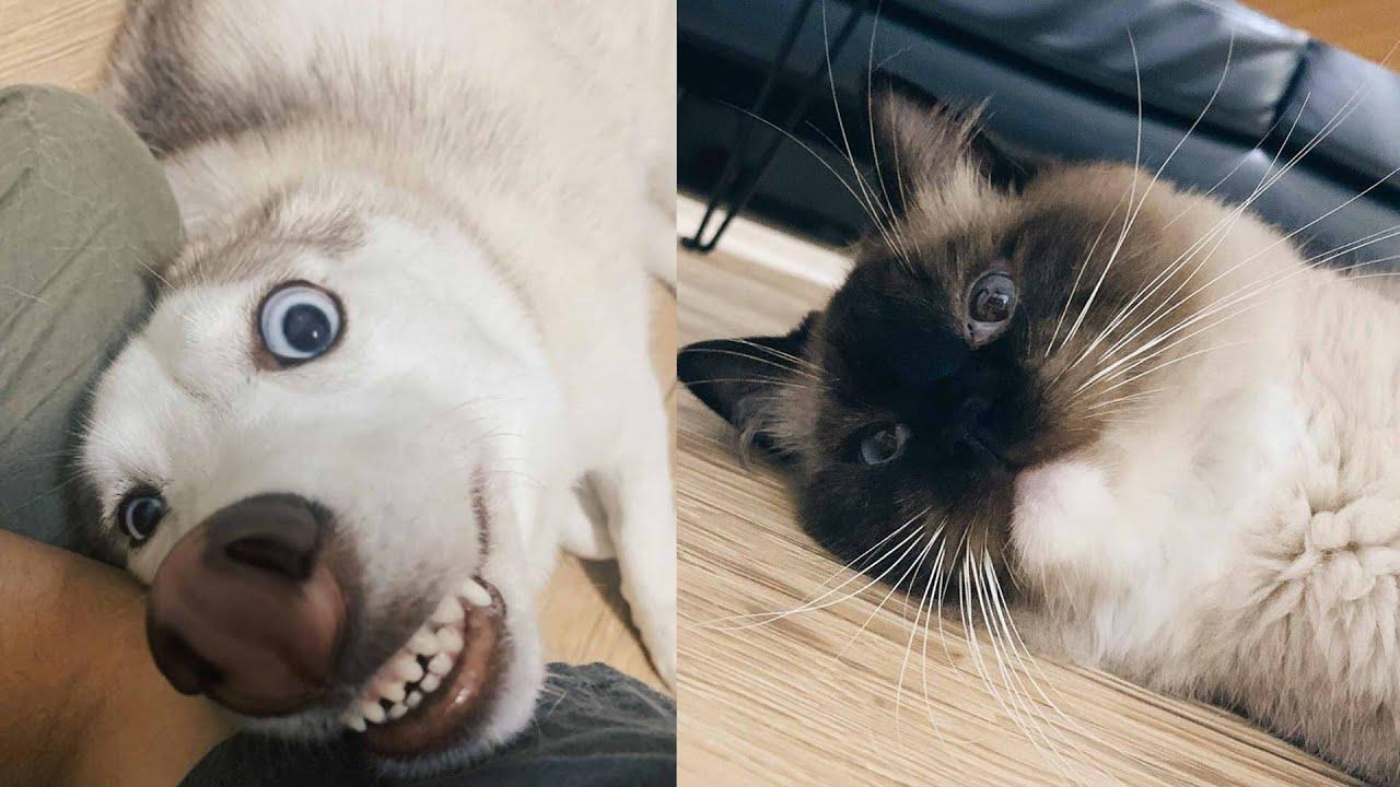 Собака и кошка : препятствие вызов 고양이 개 - YouTube