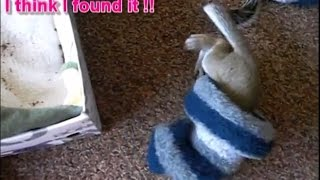 Funny and Cute Baby Squirrel Finding His New Nest - Success Story of Mon Mini Part 3