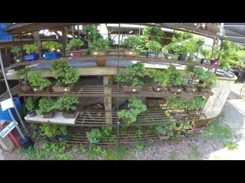 bass n bonsai tour plant city bonsai nursery garden full 4k gopro video