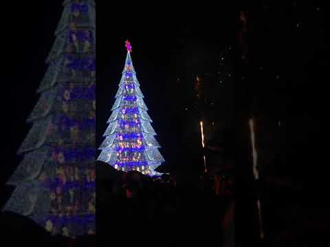 Tagum city Lighting of the Giant Christmas Tree 2017