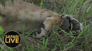 safariLIVE - Sunset Safari - October 20, 2018 thumbnail