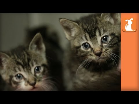 Kittens Born On The Street Looking For Homes