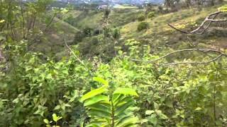 Lot For Sale In Talisay City Cebu, For Only 1500 Per Sqm
