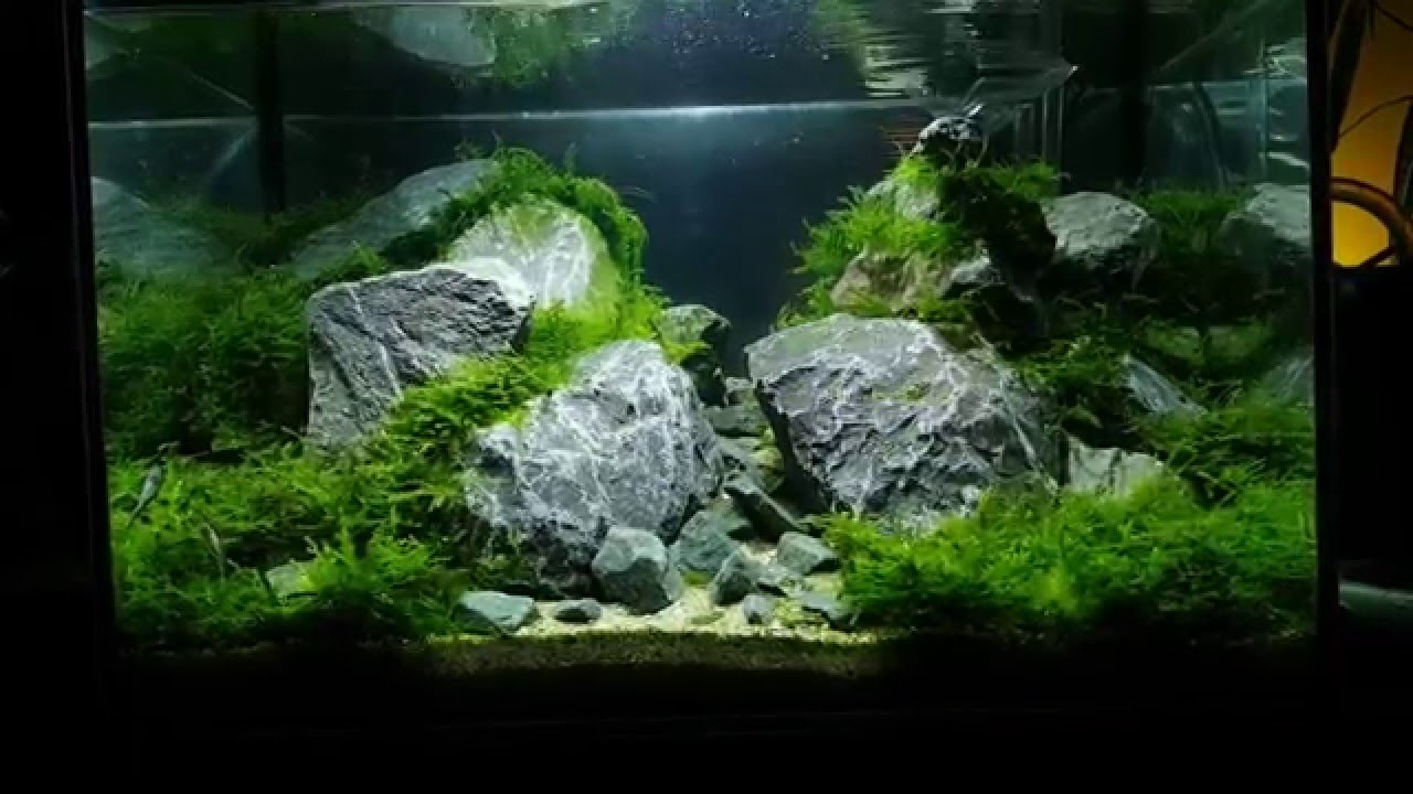 45x30x30 aquascape with rocks and moss and mirror ...