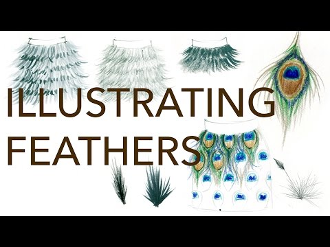 Fashion Illustration Tutorial: Feathers