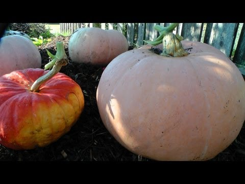 Harvest from the Three Sisters - Main Crop Garden! Mp3