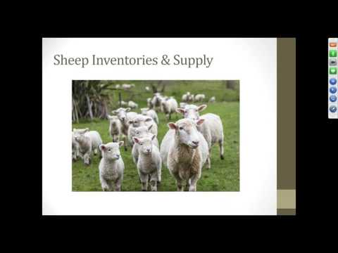 Lamb Market Update and Your Marketing Plan Options