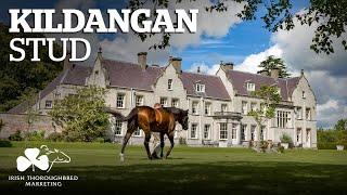 ITM Irish Stallion Showcase 2021 - Kildangan Stud