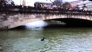 Isarsegnung (Gewässerweihung) 06.01.2012 - ΘΕΟΦΑΝΕΙΑ - Kreuz ans Ufer zurück bringen