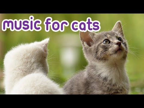 8 Hours Cat Music for Anxious Cats, Calm your kitty!