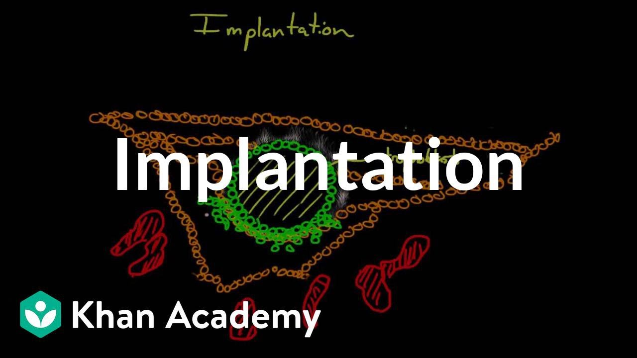 Implantation (video) | Embryology | Khan Academy