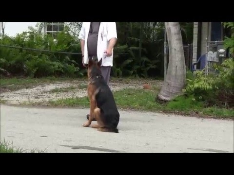 How to train your puppy! - Advanced level!