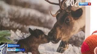 Первую информацию о северных оленях с телекамер получили специалисты Всемирного Фонда дикой природы