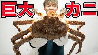 【大食い】生きてる巨大カニを食べ切る!!かにの飯テロ!