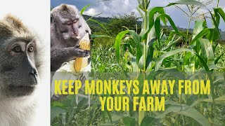keep monkeys away from your farm before it's late