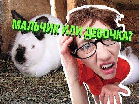 ✅ Как определить пол кролика.! Мальчик или девочка.??? Кликни чтобы узнать.!!!!!