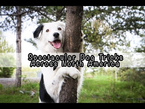 Spectacular Dog Tricks Across North America!