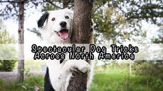 Spectacular dog tricks across north america!